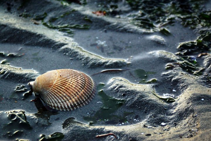 Low Tide - Brittany Megis Photography