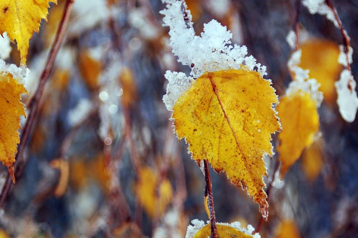 Winter Leaves - Brittany Megis Photography