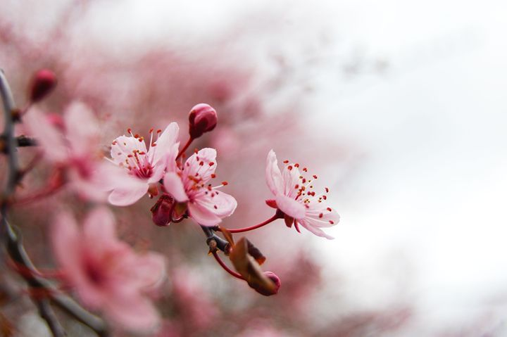 Blossoms - Brittany Megis Photography