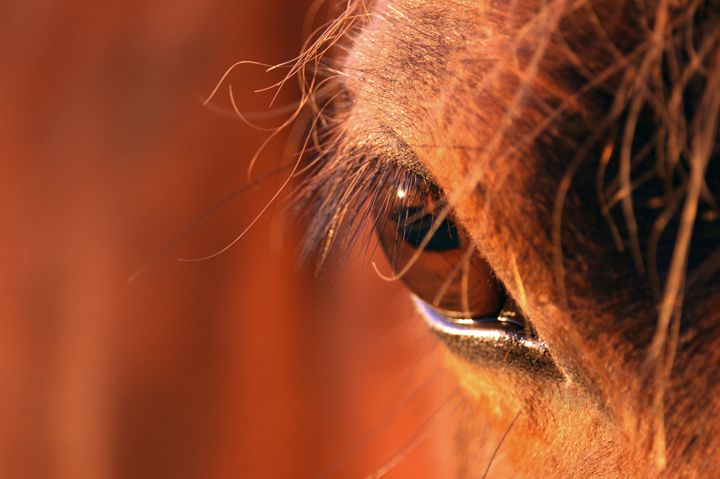 Pony's Eye - Brittany Megis Photography