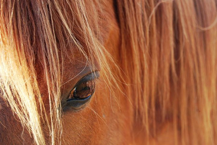 Chestnut Horse - Brittany Megis Photography
