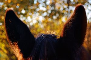 Mule Ears - Brittany Megis Photography