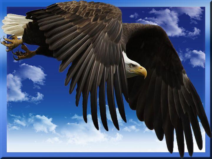 Eagle in Flight - Plainz Native Graphix