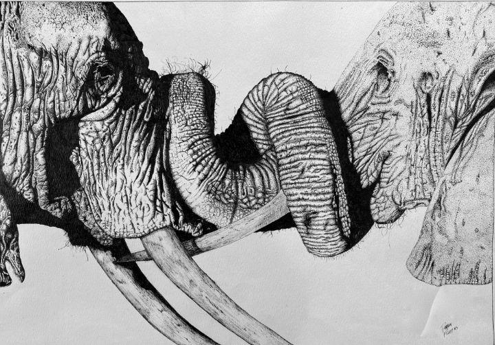 Loyalty of Elephants - Darren Brent Fuller