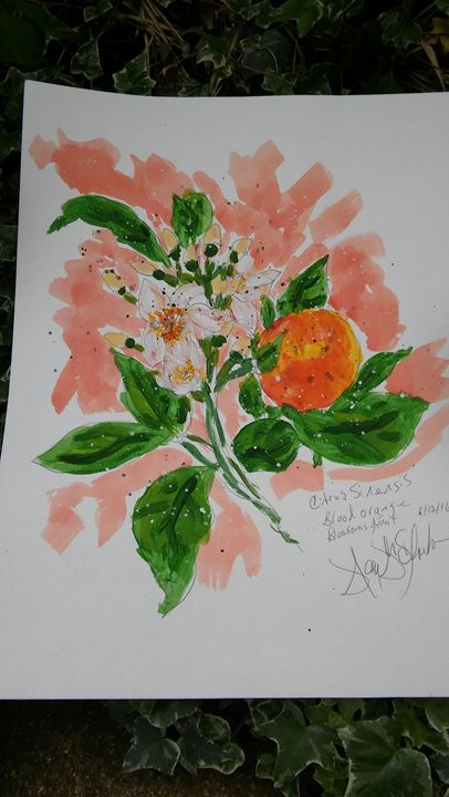 Blood Orange Flower and Fruit - Nancy's Botan Painting