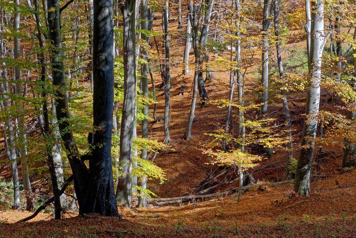 Autumn - Nature