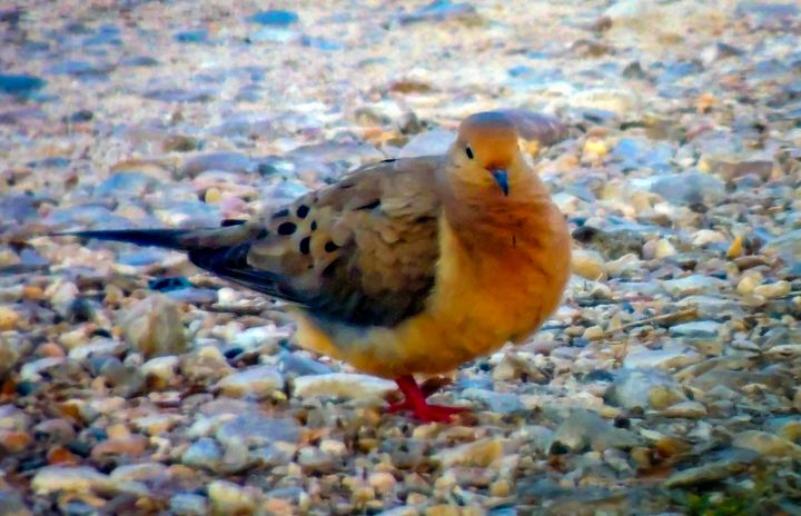 Dove on the Rocks - Lucid Night Publishing