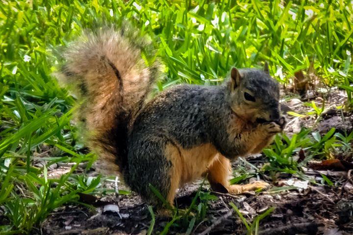 Yummy Squirrel - Lucid Night Publishing