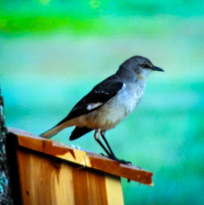 Pondering Sparrow - Lucid Night Publishing