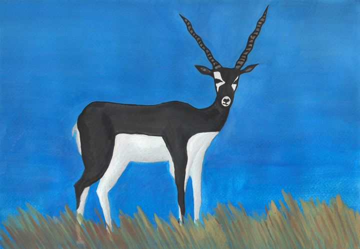 Indian Blackbuck - Jonathan A