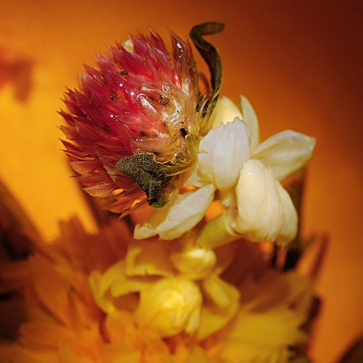 flower tea - MorozV