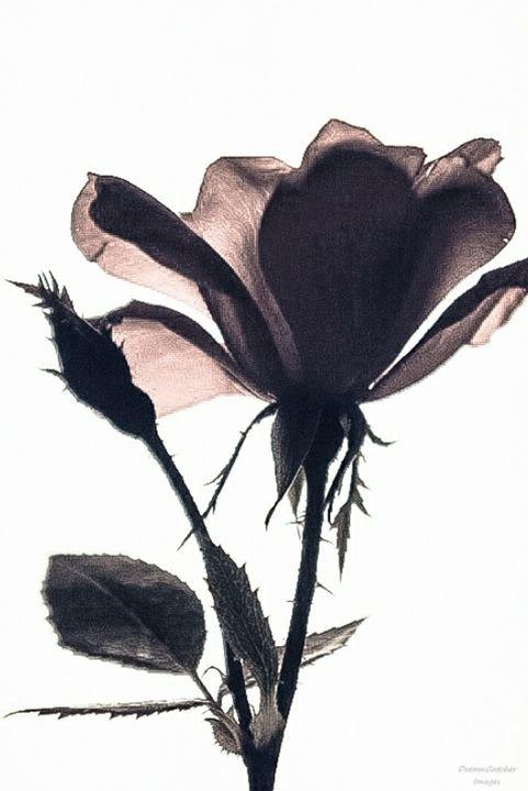 Ballet Floret - Dreamcatcher Images
