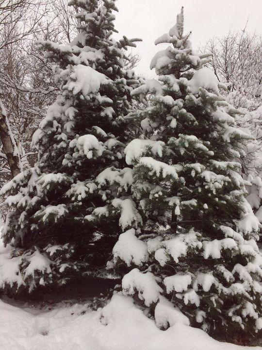 My Christmas tree - Inspirational's Gallery