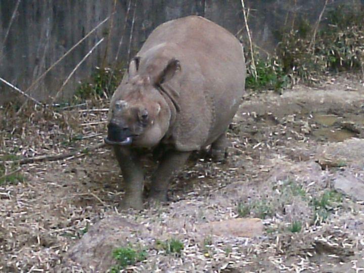 Rhino - TheR.M.artproject