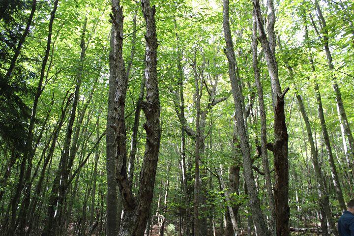 Green Forest - Aaryn Buckholtz