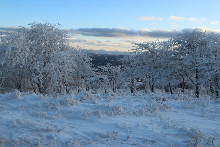 Frozen Forest - Aaryn Buckholtz