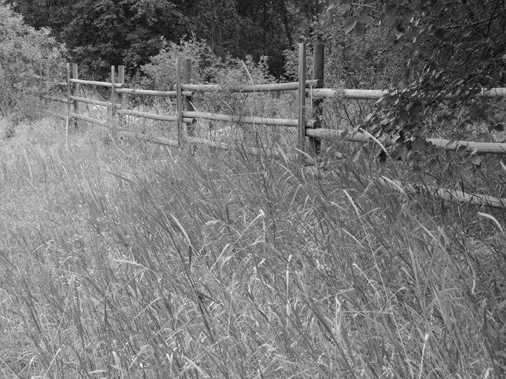 Fences - R. A. Thompson Photography