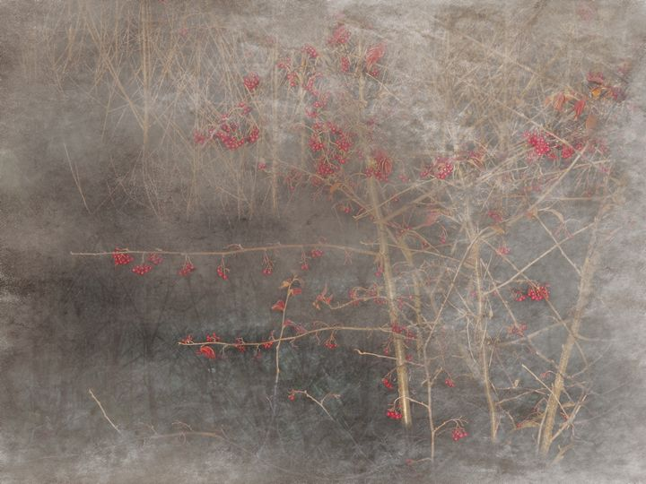 Winter Berries - R. A. Thompson Photography