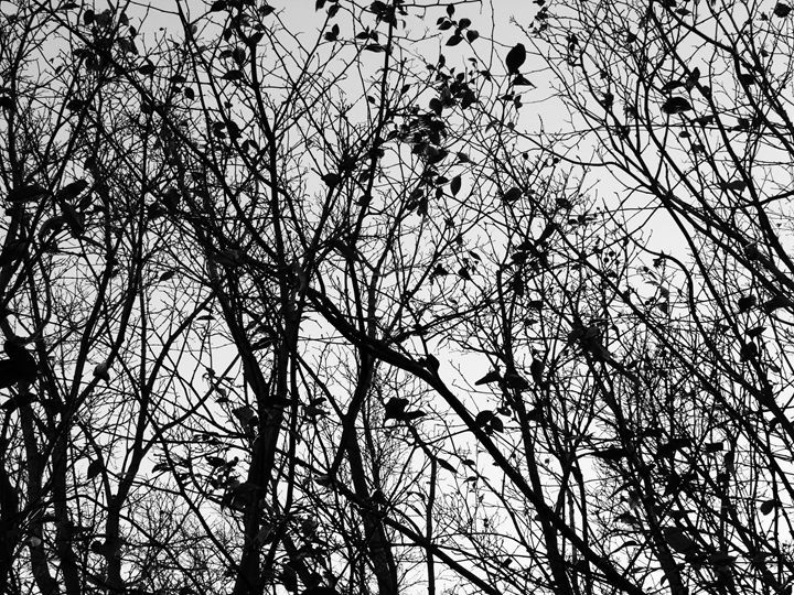 Black Trees - R. A. Thompson Photography