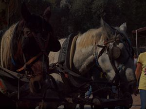 Selcuk, Turkey (Horses)