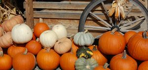Pumpkins and wheel