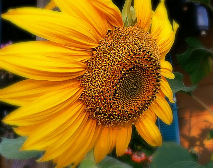 Oh Purdy Sunflower - Blue Blue Sky Creations