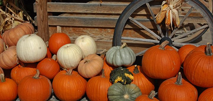 Fresh Pumpkins - CalicoPony Creations