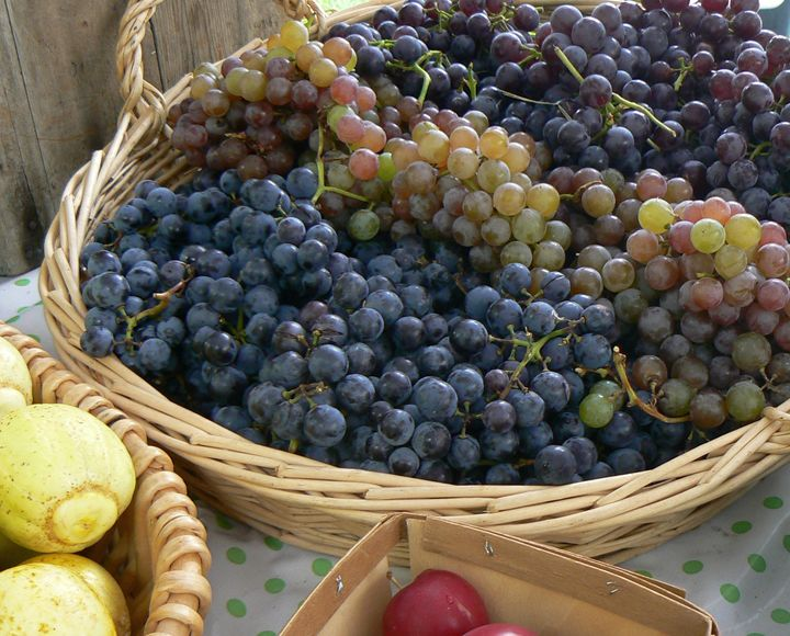Grapes in the basket - Blue Blue Sky Creations