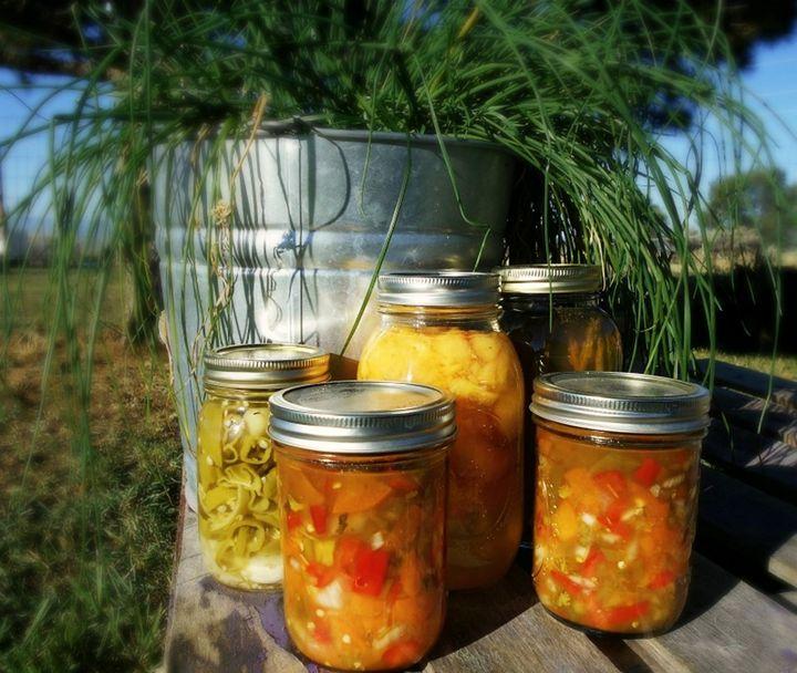 Apricot Salsa too - CalicoPony Creations