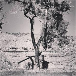 Walker Cabin Single tree