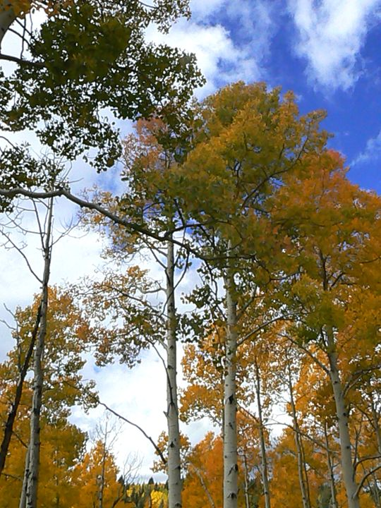 Yellow Grove - Blue Blue Sky Creations
