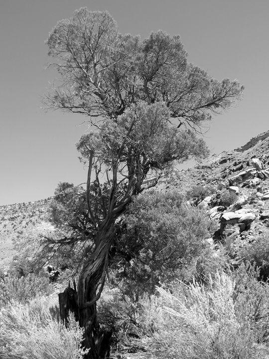 Sacred Tree - Blue Blue Sky Creations