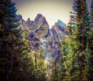 Owl Mountain USA - Chad Vidas Outdoors