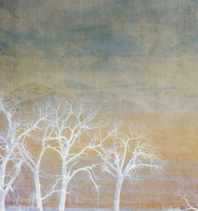 Colorado Abstraction - Chad Vidas Outdoors
