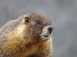 I am Marmot - Chad Vidas Outdoors