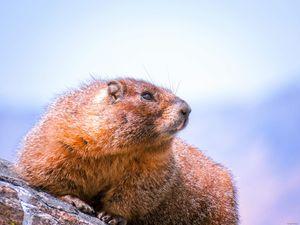 Marmot I said Marmot - Chad Vidas Outdoors