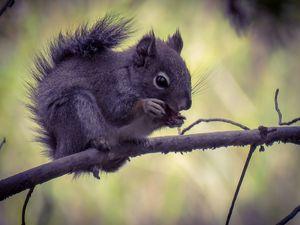 Squirrel - Chad Vidas Outdoors