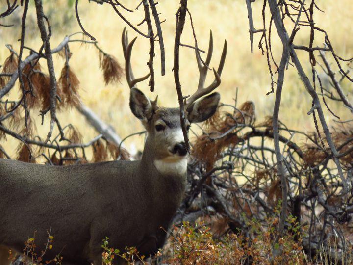Deer Season - Chad Vidas Outdoors
