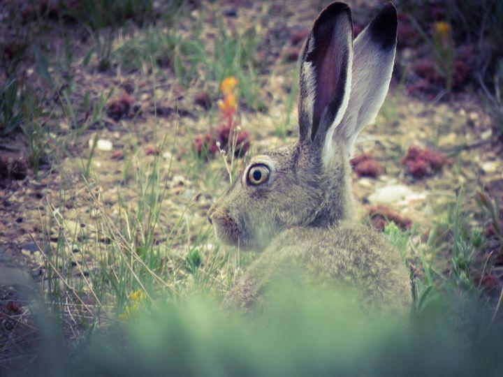 Jack Rabbit - Chad Vidas Outdoors