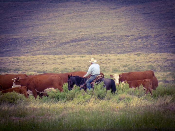 The Cowboys - Chad Vidas Outdoors