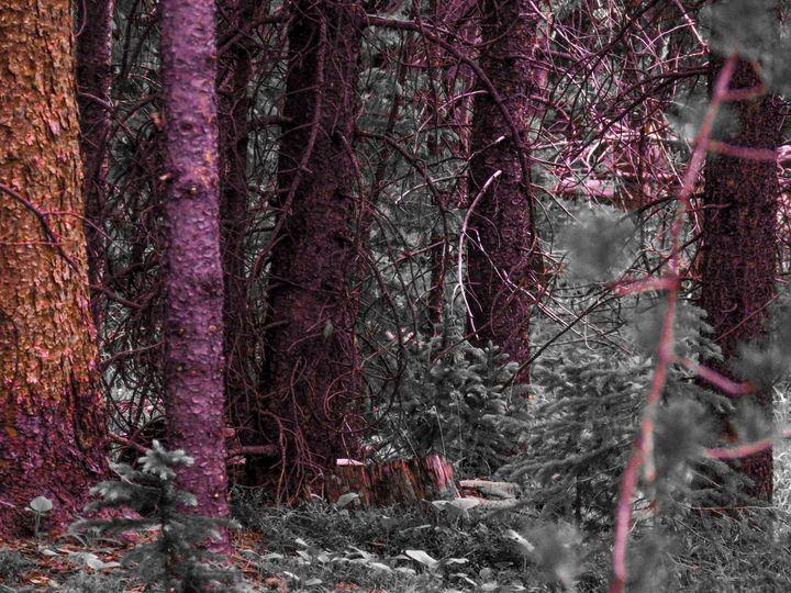 Dark Forest - Chad Vidas Outdoors
