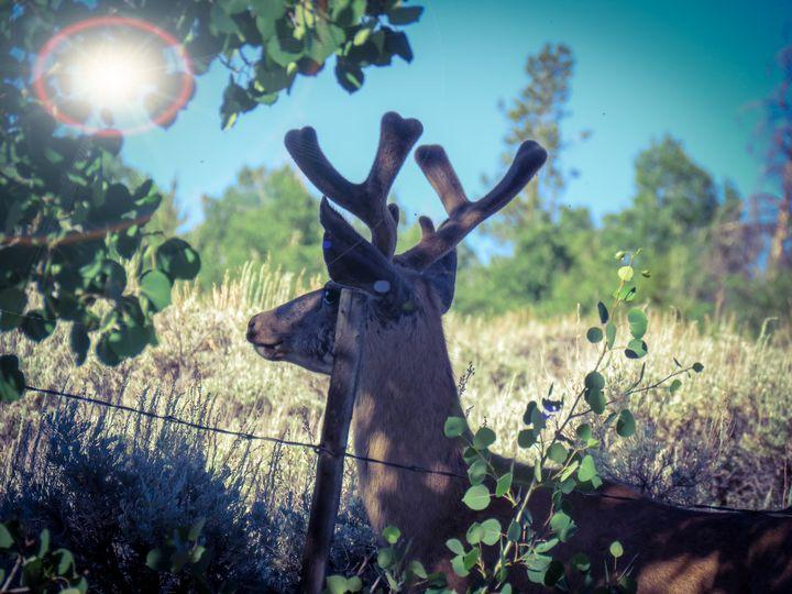 Walden Buck - Chad Vidas Outdoors