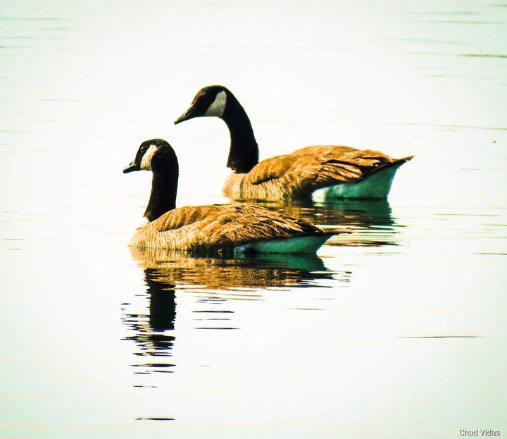 Goose Moment - Chad Vidas Outdoors
