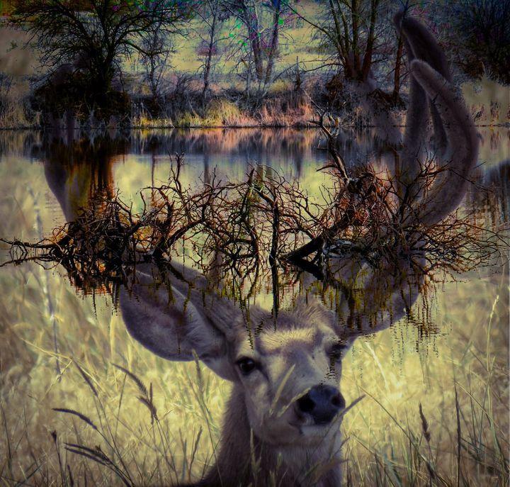 Bucks Pond - Chad Vidas Outdoors