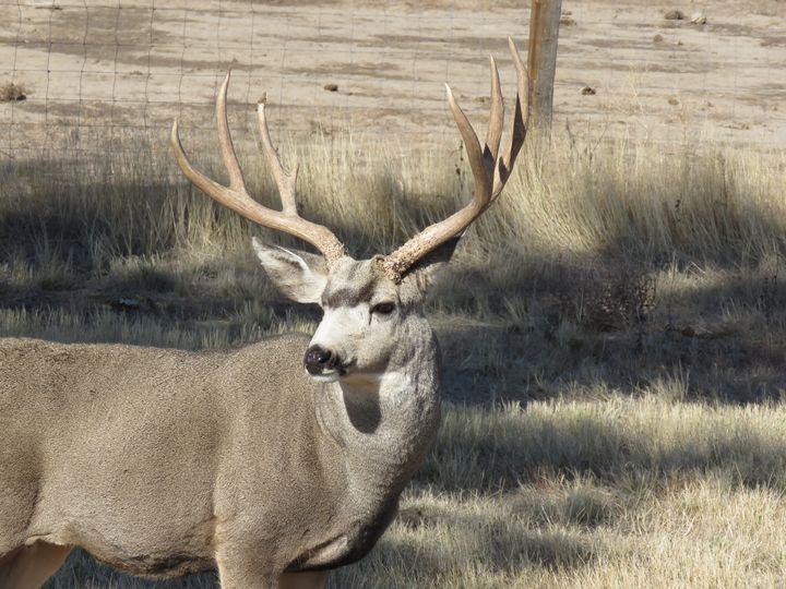 A Muley In Colorado - Chad Vidas Outdoors