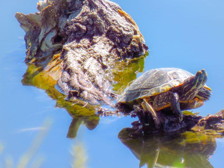 Colorful Colorado Turtle - Chad Vidas Outdoors