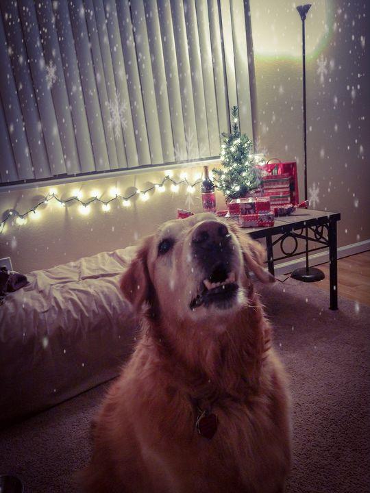 Christmas Retriever - Chad Vidas Outdoors