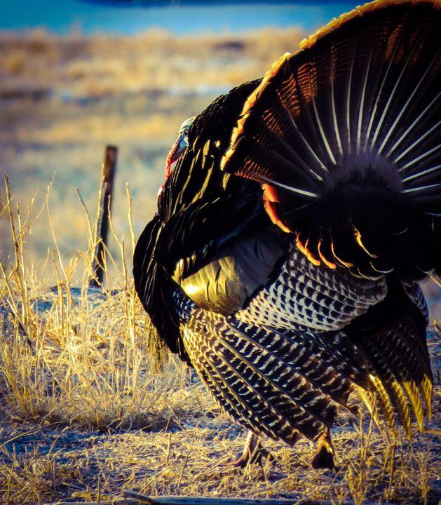 Turkey Trot - Chad Vidas Outdoors