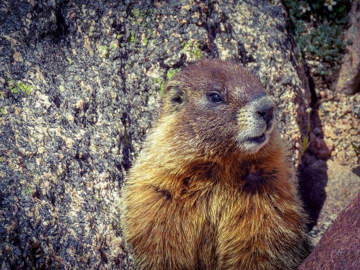 Marmot - Chad Vidas Outdoors