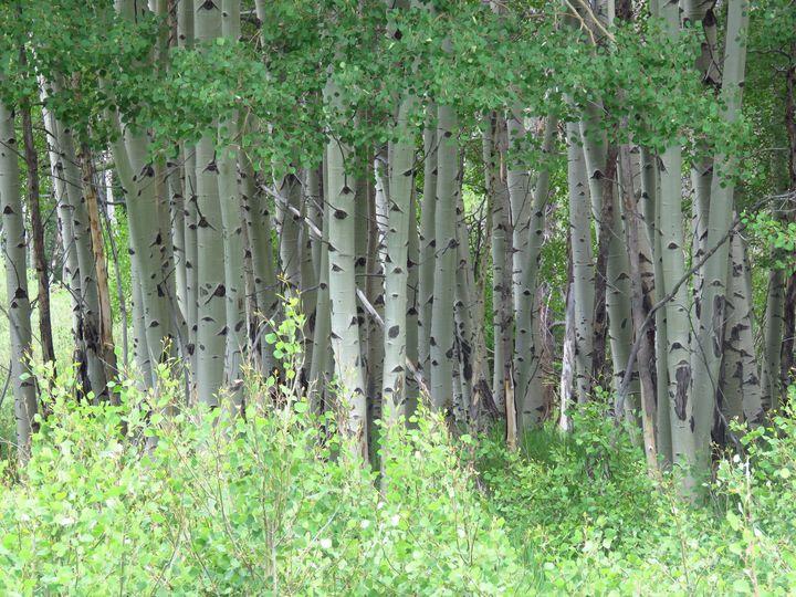 Aspen, Colorado - Chad Vidas Outdoors